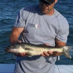 walleye fishing charter Lake Erie Michigan